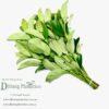 Glossy Viburnum – Viburnum Emerald Lustre (60cm)
