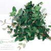Eucalyptus soft