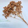 Dried Paper Pom Poms